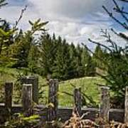 View From Picket Fence Art Print