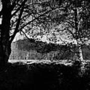 View Through The Trees Art Print