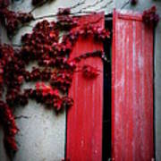 Vines On Red Shutters Art Print