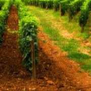 Vineyard In Burgundy France Art Print
