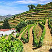 Vineyard Landscape Art Print