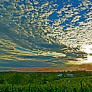 Vineyard Sunset I Art Print