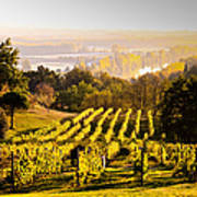 Vineyard Art Print by Voisin and Phanie and Photo Researchers