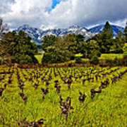 Vineyards And Mt St. Helena Art Print by Garry Gay