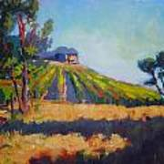 Vineyards At Sarver Art Print