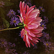 Vintage October Dahlia Art Print by Richard Cummings