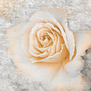 Vintage Rose II Art Print