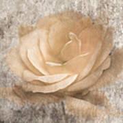 Vintage Rose IIi Art Print