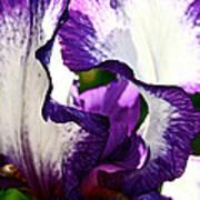 Violet Edges Art Print