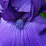 Vision In Violet Art Print