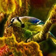 Visions Of A Blue Jay Art Print