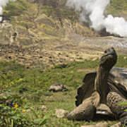 Volcan Alcedo Giant Tortoise Geochelone Art Print