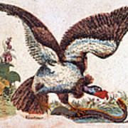 Vulture Attacking A Snake Art Print