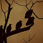 Vulture Island Art Print
