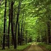 Walking Away Forest Path  Art Print