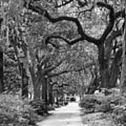 Walking Through The Park In Black And White Print by Suzanne Gaff