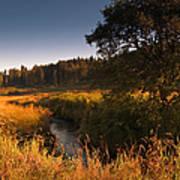 Warm Morning Sun. The Trossachs National Park. Scotland Art Print