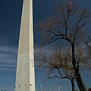 Washington Monument's World Famous Kite Eating Tree Art Print