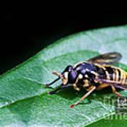 Wasp Break Art Print
