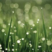 Water Drops On Grass Art Print