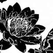 Water Lily Black And White Art Print