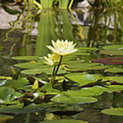 Water Lily Garden 1 Art Print