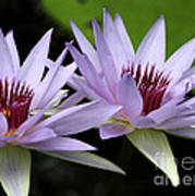 Water Lily Twins Art Print