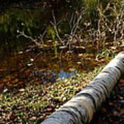 Water Seeing Art Print