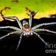 Water Spider Art Print
