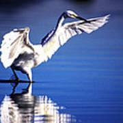 Waterdancer Art Print