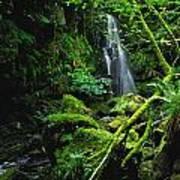 Waterfall, Sloughan Glen, Co Tyrone Art Print
