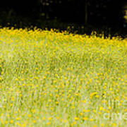 Waves Of Yellow Art Print
