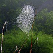 Web Over Foggy Lake Art Print