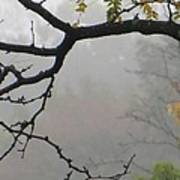Wednesday Mist Art Print