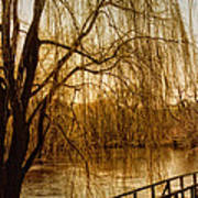 Weeping Willow And Bridge Art Print