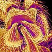 Weevil Leg, Sem Art Print