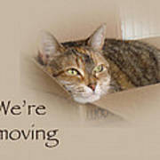 We're Moving Notification Greeting Card - Lily The Cat Art Print