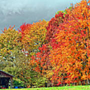 West Virginia Maples 2 Art Print by Steve Harrington