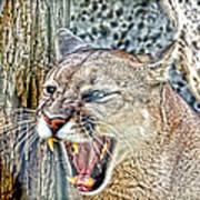 Western Cougar Art Print