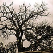 Western Winter Tree Art Print