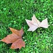 Wet Leaves On Grass Art Print