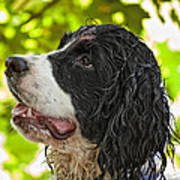Wet Puppy 2 Art Print