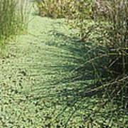 Wetland Shadows Art Print
