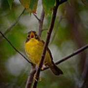 What Warblers Do Art Print