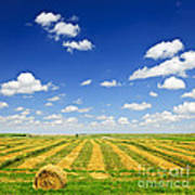 Wheat Farm Field At Harvest Art Print