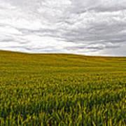 Wheat Field Homestead Art Print
