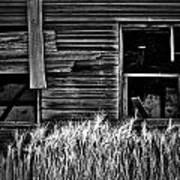 Wheat To Meet  Art Print