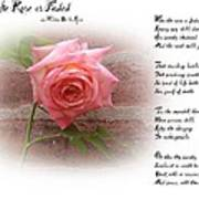 When The Rose Is Faded Art Print