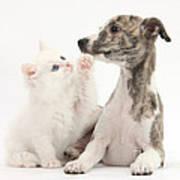 Whippet Puppy And Kitten Art Print