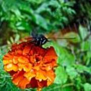 Whirl Wings Butterfly Art Print